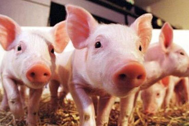 湖南出台12条政策措施 促进生猪生产 保障市场供应