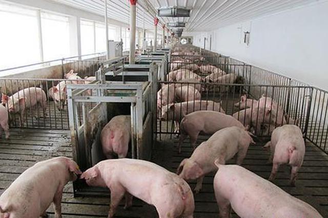 农业农村部:当前非洲猪瘟疫情发生势头明显减缓