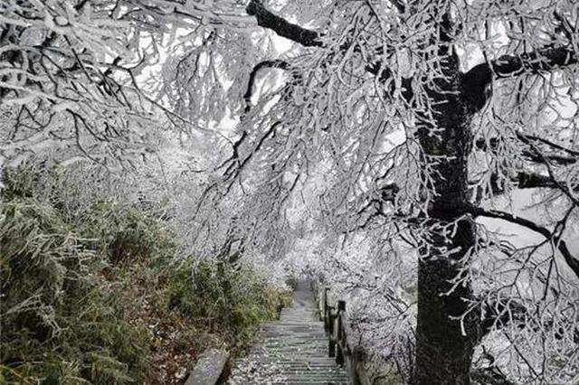 组图|新化大熊山迎来今年入冬以来首场雾凇景观