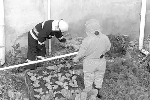 常德桃源:消防员清理大蜂窝