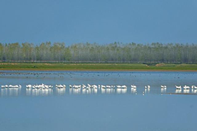 今年来西洞庭湖越冬的候鸟已达3万多只