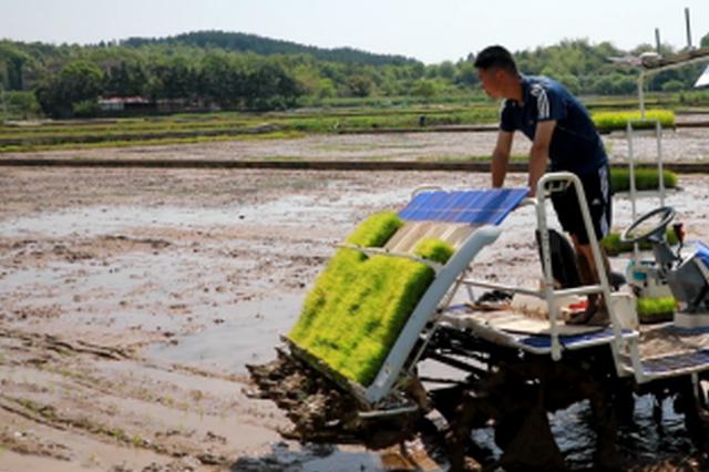 祁阳:田间玩转高科技 农户种田更轻松