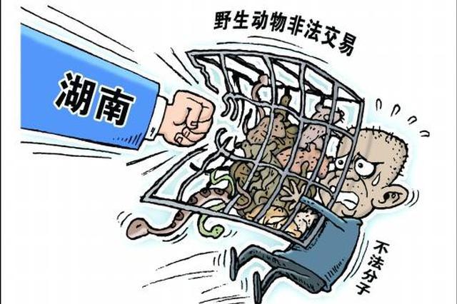 湖南出台意见全面禁止非法野生动物交易,这些动物都不能吃了