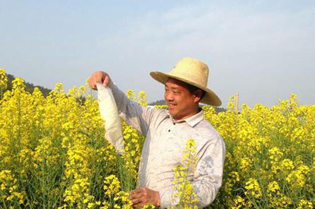 """全国首例!湖南农民研究培育出的杂交油菜种子有了""""身份证"""""""