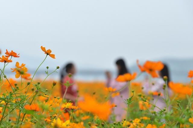 衡东:洣水湿地花海迎客来
