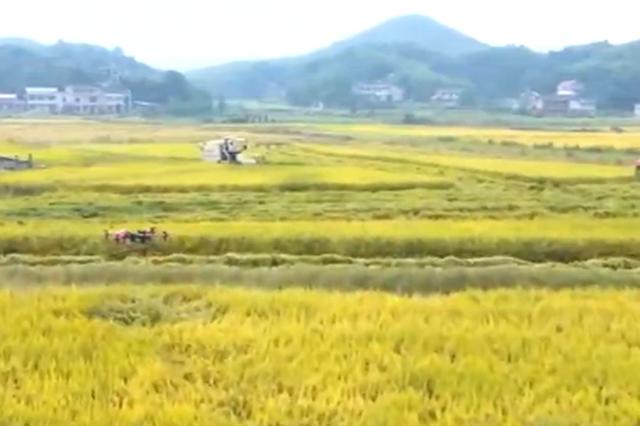 湖南衡山:多措并举助农户抢收稻谷