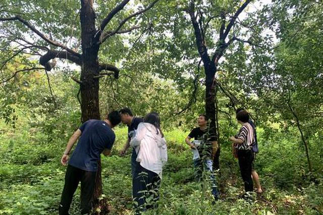 湘鄂签订重大林业有害生物联防联治协议
