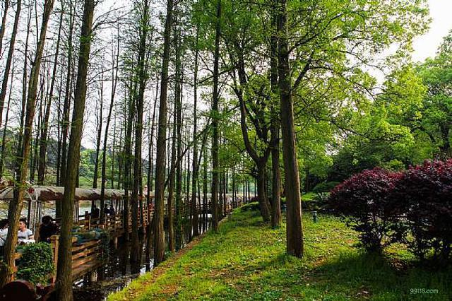 湖南:发布森林火险橙色预警 启动响应措施