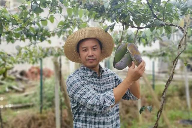 科学农事:冬季草莓怎么选?邓建平教授来帮手!
