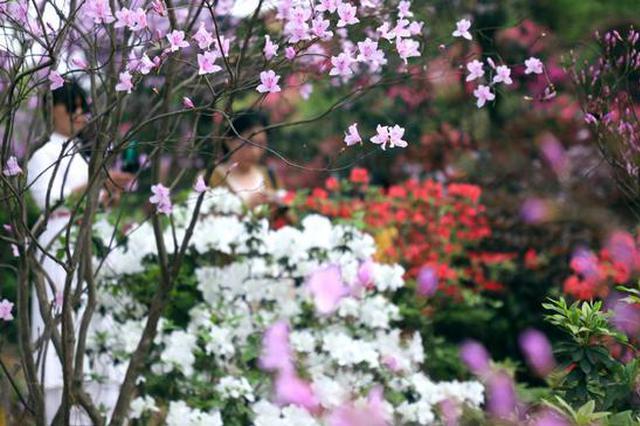 清明小长假游省植物园请提前预约,每日限流3万人