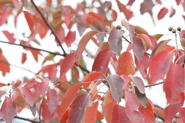 航拍深秋丨是端庄的绿林 着上大气的红装