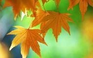 秋冬想无病 这几条需要谨记