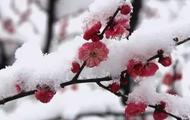今日大雪 愿与你共白头