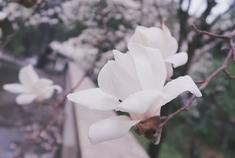 湖南各高校鲜花已盛开