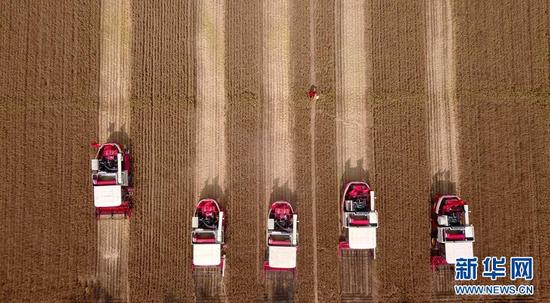 在山东省济宁市嘉祥县仲山镇,工作人员操作收割机收割小麦(5月31日无人机拍摄)。 新华社记者 郭绪雷 摄