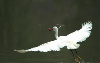 郴州城区水清景美引来白鹭频频驻足!