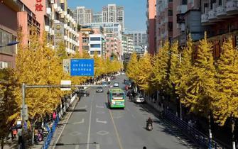 闹市藏美景 这里的秋色美极了!