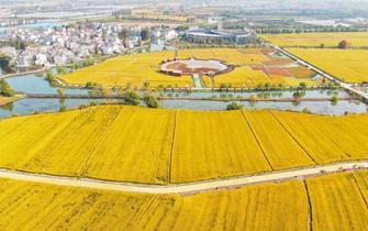 农业农村部加强转基因生物监管 严防非法生产经营