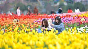 春分时节春光好 游客畅游植物园花海