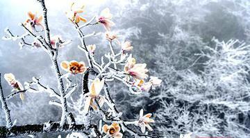 天门山的3月 再现冰雪美景
