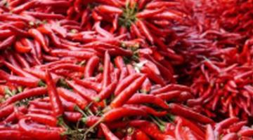 吃辣椒到底防癌还是致癌
