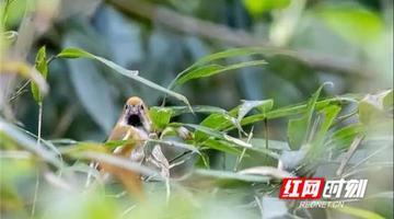 张家界八大公山国家级自然保护区发现3个新记录种