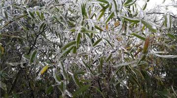 湖南本周最低温度都在个位数