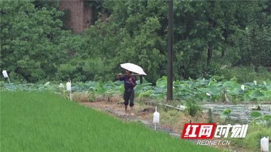 8月15日,衡阳县多个乡镇平均降雨量达15毫米以上,使持续多日的旱情得到有效缓解。