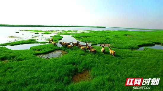 岳阳东站:东洞庭湖湿地。
