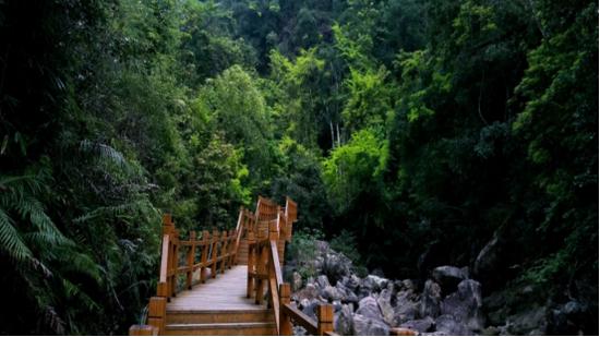 九龙江森林公园