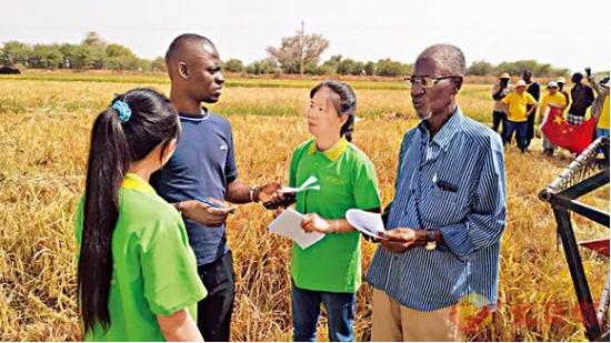 湖南水稻专家在非洲推广杂交水稻 (资料图)