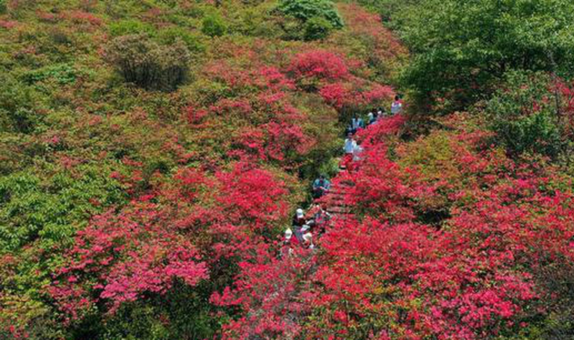 """湖南:""""五一""""森林旅游市场人气爆棚 全省森林景区综合收入超"""