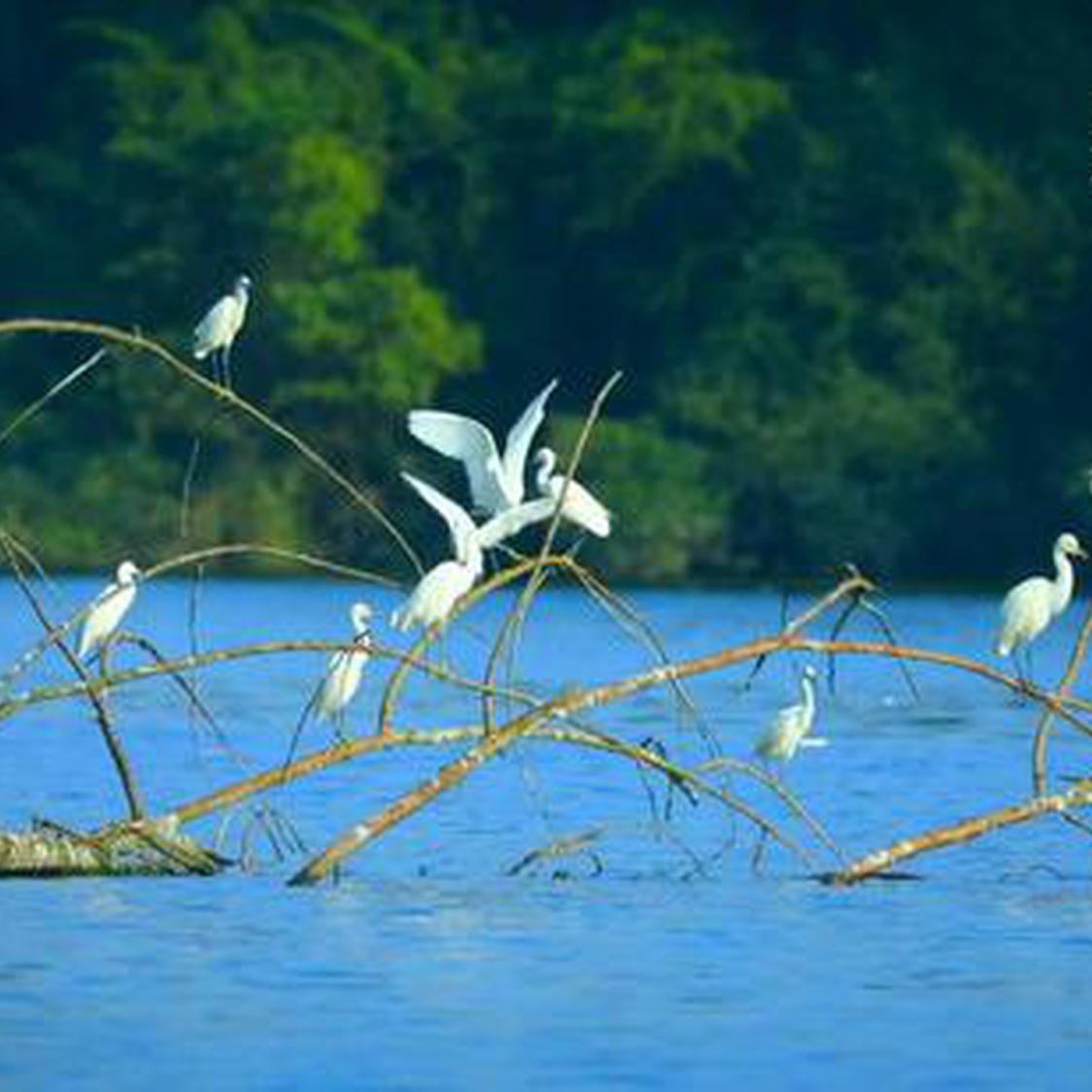 """龙湾国家湿地公园——美丽的候鸟迁徙""""驿站"""""""