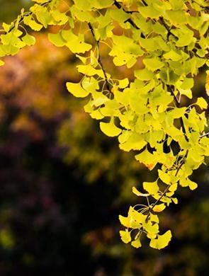 邂逅五彩的叶  瞥见莲城的秋