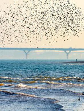 """长沙江滩公园""""接待""""数万候鸟 成越冬天堂"""