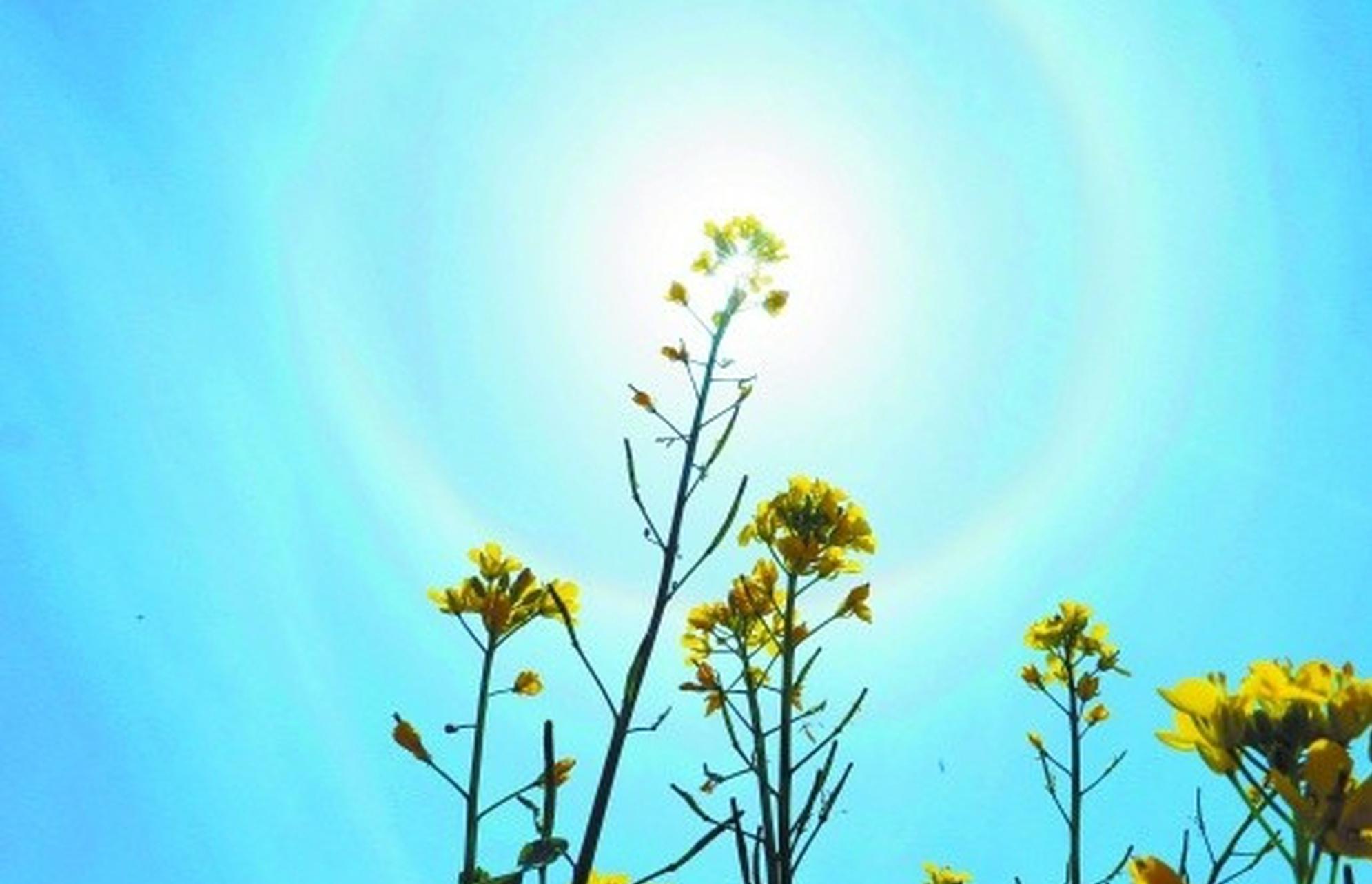 靖州惊现绚丽日晕奇观