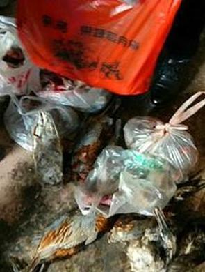 常德发现大量野生动物死体 依法处理