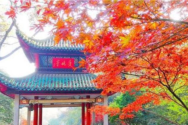 """霜叶红于二月花 长沙岳麓山已现最佳""""枫""""景"""