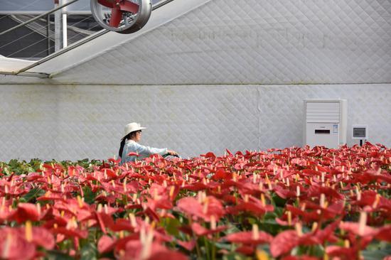 新春走基层:普乐镇脱贫路的阳光与鲜花