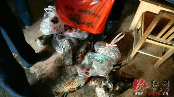 常德发现大量野生动物死体  涉嫌业主被依法处理