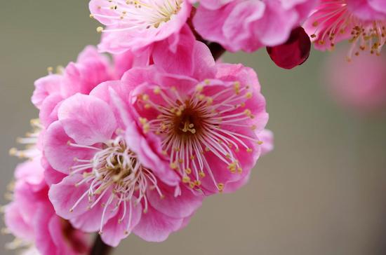 2019中国南京国际梅花节2月16日开幕啦