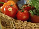 西红柿有哪些好处? 晚间西红柿该怎么吃才能减肥