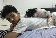 泰国男子把母猪当女朋友养