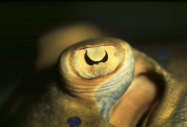 你知道鱼儿眼睛有多奇妙吗?