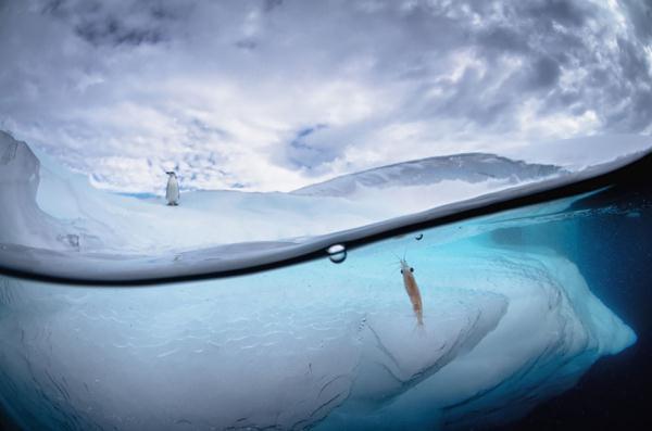 多样的世界需多样的角度 精彩各异的水上水下