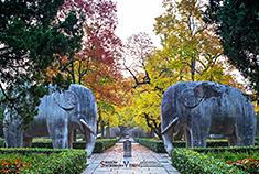 寻访美了600年的南京石象路