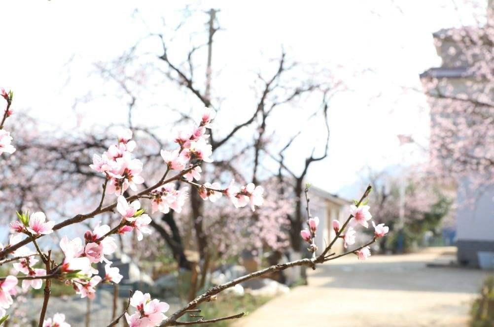 """""""春如四季""""又来了:周三最高28℃,周四气温""""大跳水"""""""
