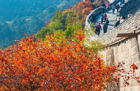 河南17岁游客杨某在八达岭长城城砖上刻字 被罚200元