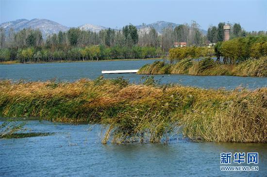 这是徐州潘安湖湿地公园(2012年11月11日摄)。 新华社记者韩瑜庆摄