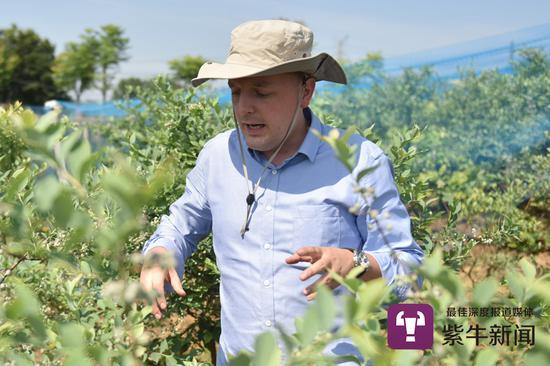 马克斯在检查蓝莓成长情况